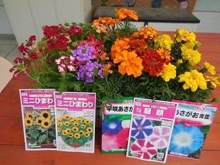 種まき.JPG